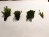 使用した4種の苔!